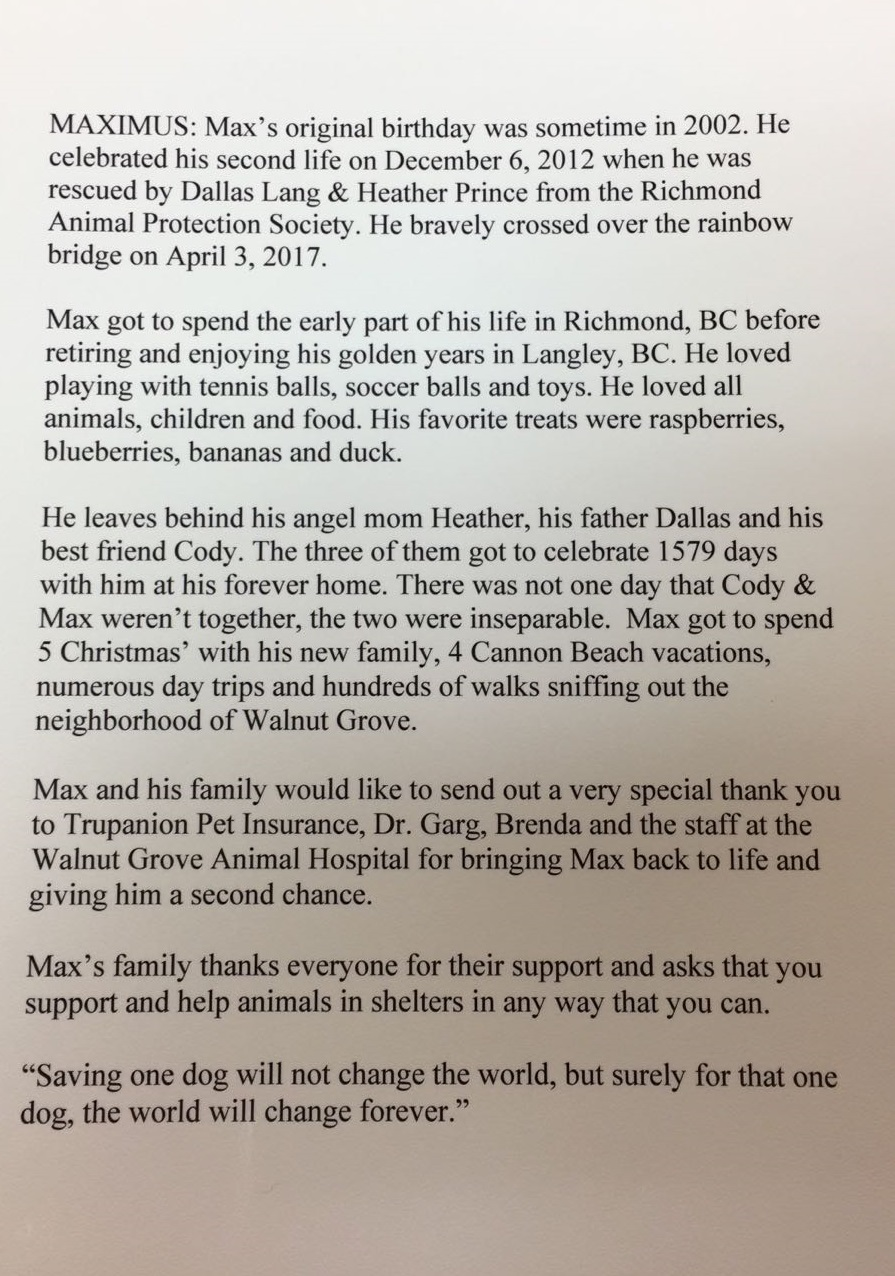testimonial walnut grove animal hospital langley